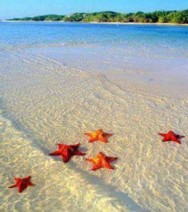 quelques-etoiles-de-mer-abandonnees-sur-le-sable-suffisent-a-donner-une-allure-paradisiaque-a-cette-plage-credits-isabelle-santana_50627_w460