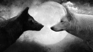 wolf-moon-black-white